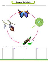 Life science worksheets pdf and games for kids
