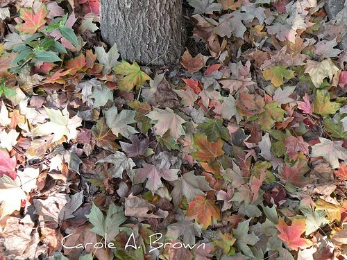 Life in the Leaf Litter: Don't Throw a Good Thing Away