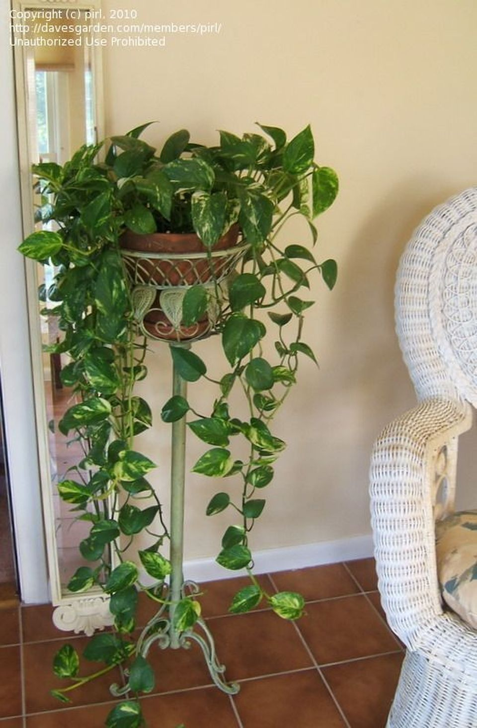 Cool Plant Stand Design Ideas for Indoor Houseplants ... on House Plant Stand Ideas  id=96017