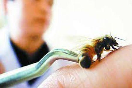 apiterapia - veneno de abeja