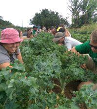 Horticultura terapéutica