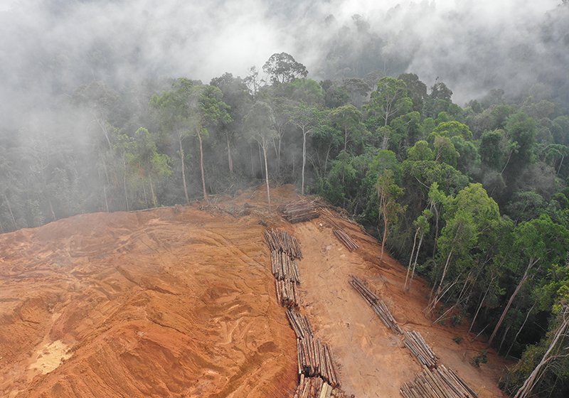 Up to80% of terrestrial biodiversityi.e. Viscose Linked To Borneo Deforestation Materials Production News News