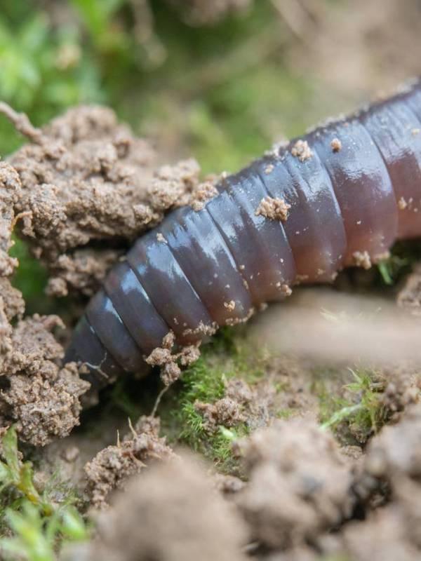 Cada año se pierden millones de toneladas de suelo fértil en todo el Planeta