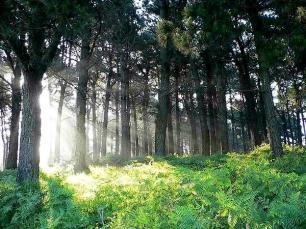 bosque español