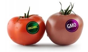Transgénicos: ¿estamos seguros de qué es lo que comemos?