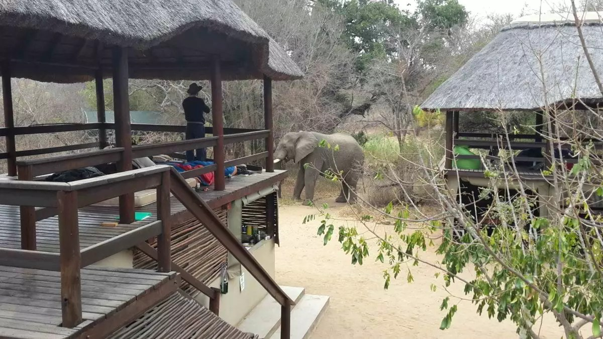 Ben-Coley_Elephant-in-camp-Karongwe1