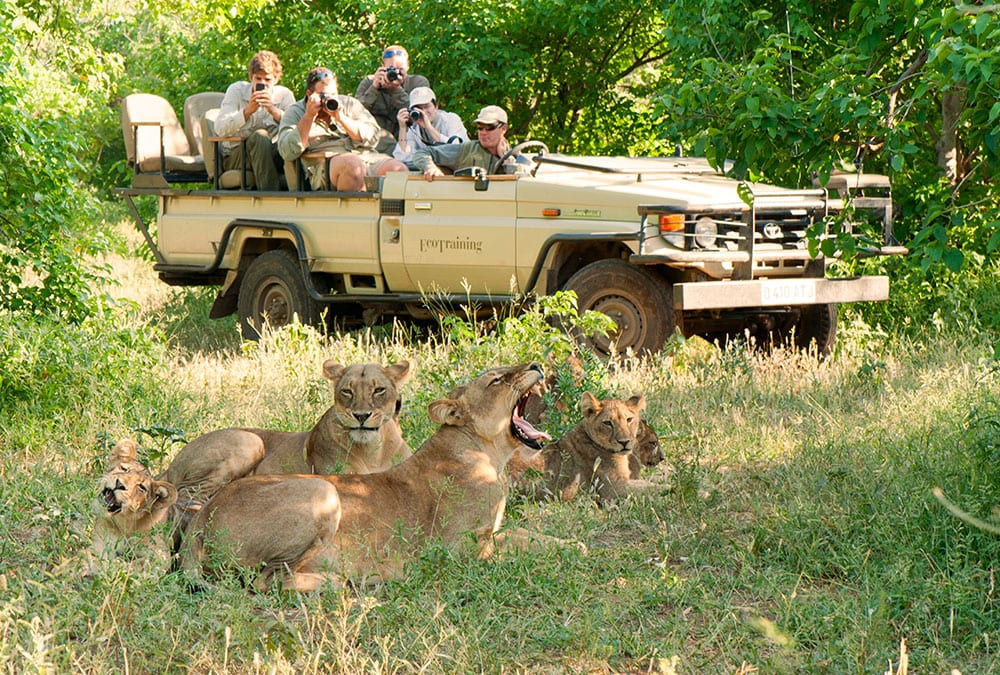 EcoQuest-EcoTraining-Lion-Viewing