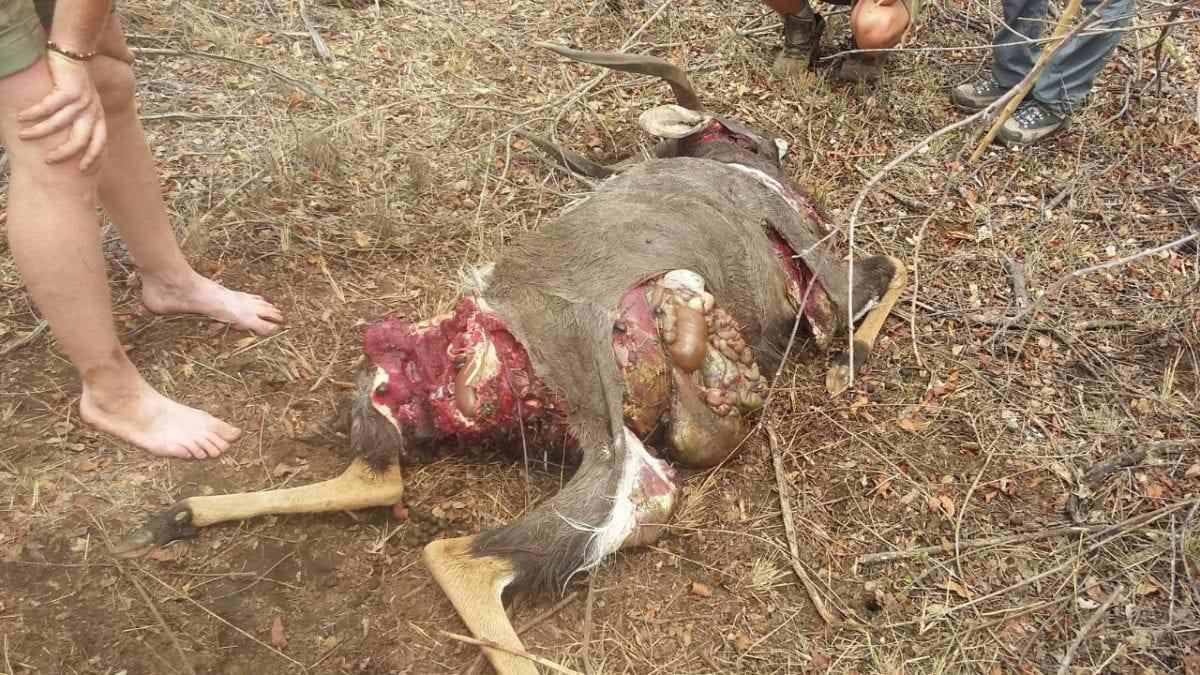 Selati_Nyala-bull-killed-by-lions-10m-from-ladies-bathroom