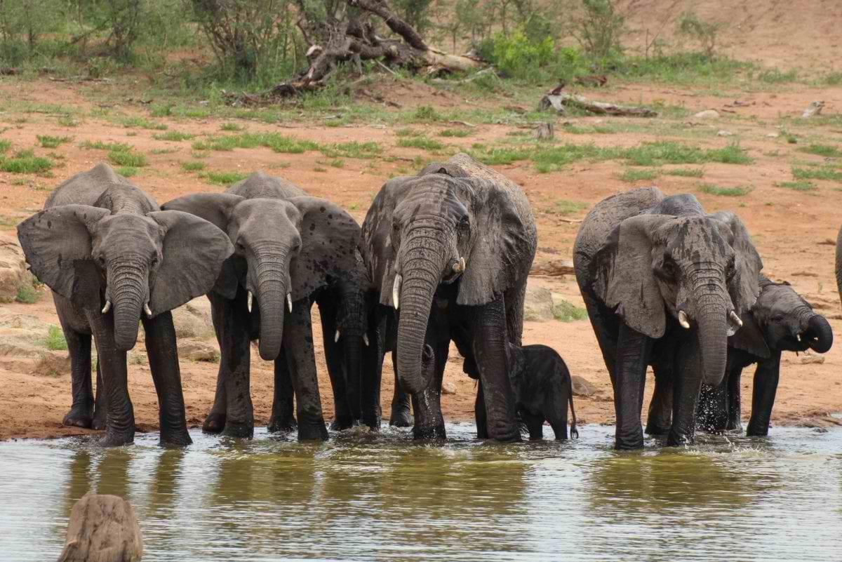 Selati_elephant-herd_Cara-Pring-1_170202_101419