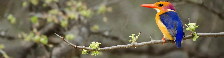 birding-in-the-bush bird watching course
