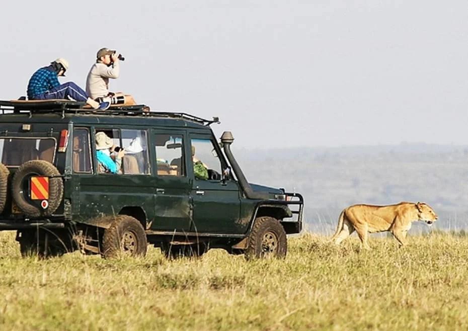 kenya-safari-guide-featured-image