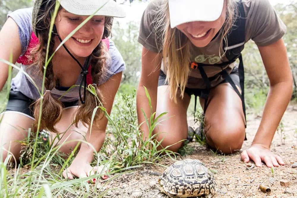 matrics-ecoquest-ecotraining-bush-rage