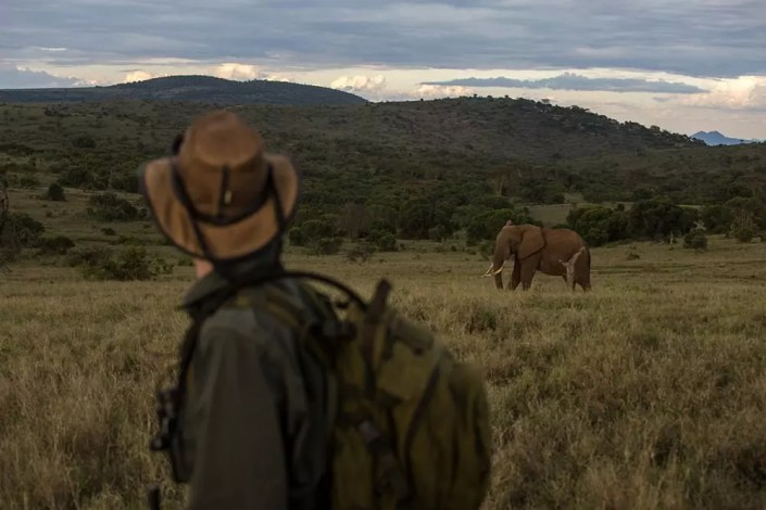 Kenya Safari Guide EcoTraining