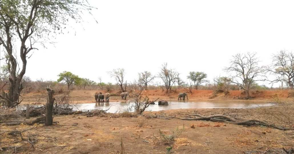 EcoTraining Pridelands Camp Waterhole
