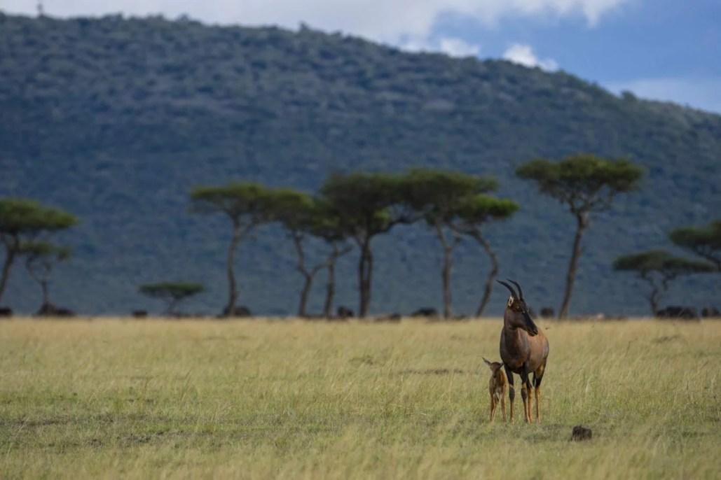 East African Animals - EcoTraining Quiz - East African Animals