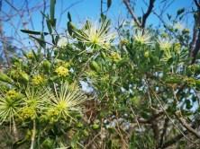 Bushveld Flowers
