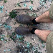 Elephant Tracking - Ecotraining