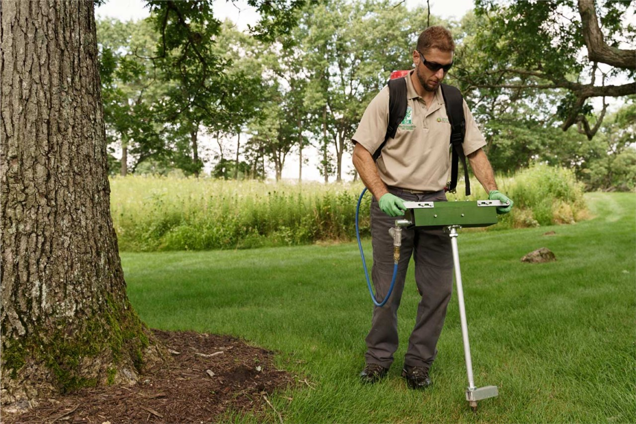 Proper tree care and nutrition