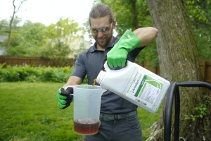 Pouring a solution to test for Dutch Elm Disease