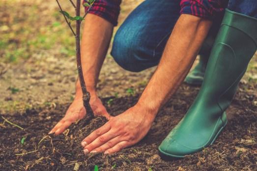 transplanting a new tree