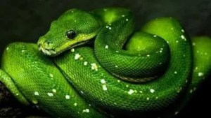Python Programming Build 15 Applications Online Course Free