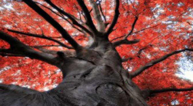 St Exupéry : L'arbre, c'est cette puissance qui lentement épouse le ciel