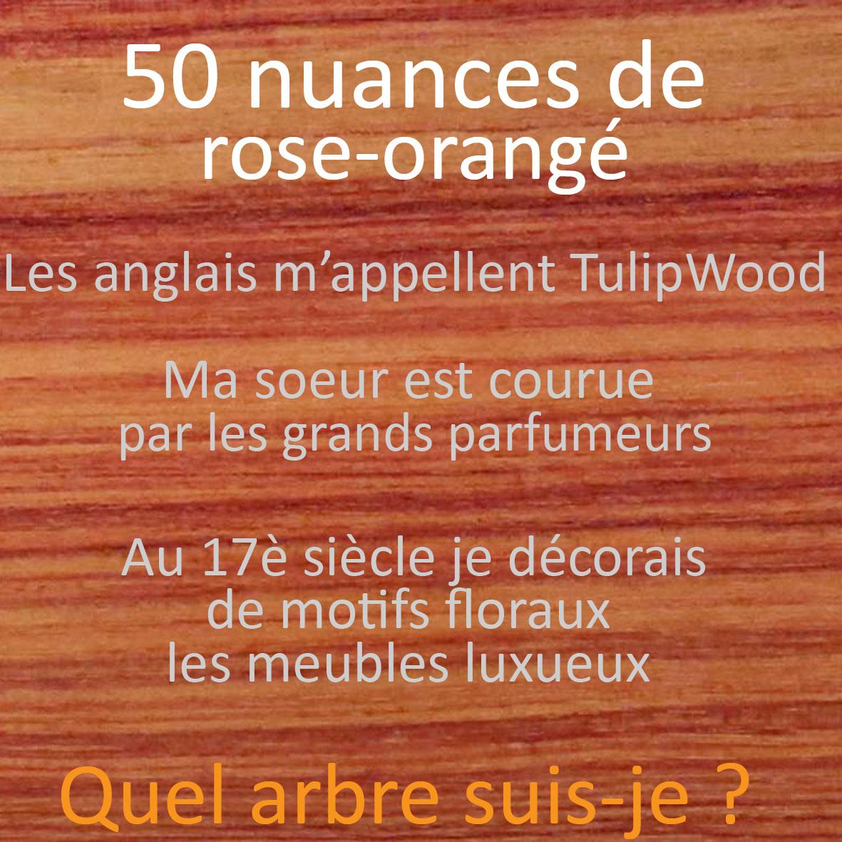 Quiz essences de bois 50 nuances d'orangé Ecoute le Bois # Reconnaitre Les Essences De Bois