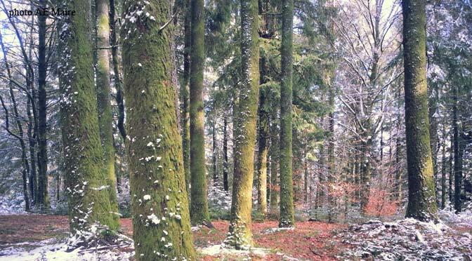 arbres-mousse-lac-de-vassiviere
