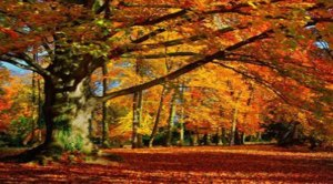 aarbres-soleil-citation-exupery