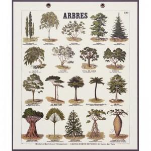planche cartonnée les arbres, chez Deyrolle
