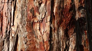 bois élément