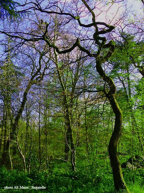 Ecoute le bois blog sensoriel et amoureux du bois for Bois tortueux deco