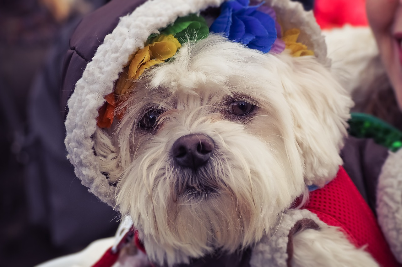 What to Consider When Buying a Christmas Dress for Your Dog