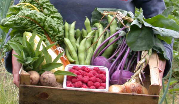 Vegbox scheme adds new collection points- Take that supermarkets!