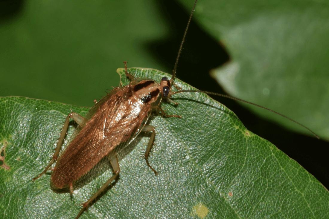 goodbye bugs pest control