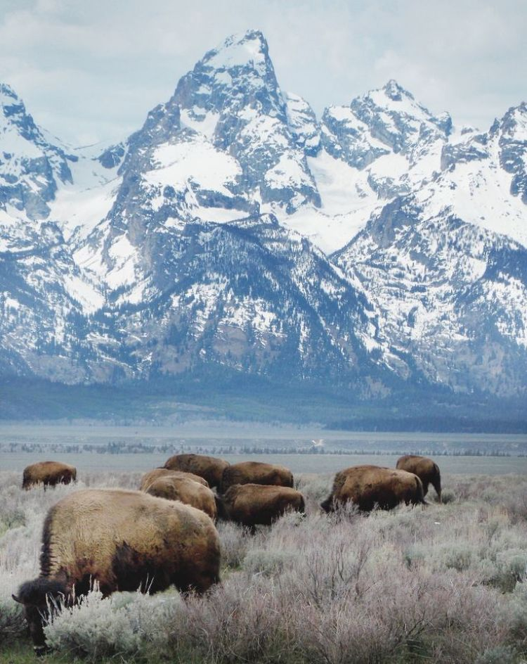 Some Highlights Of The Grand Teton National Park Wyoming Usa