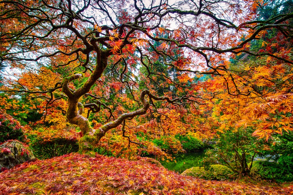 27 Most Amazing Trees In The World Famous Trees In The World