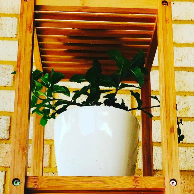 The first paragraph of put mini hen garden is complete! #herbsgarden #greenthumb #gardener #shutupandplant #loveplants🌿