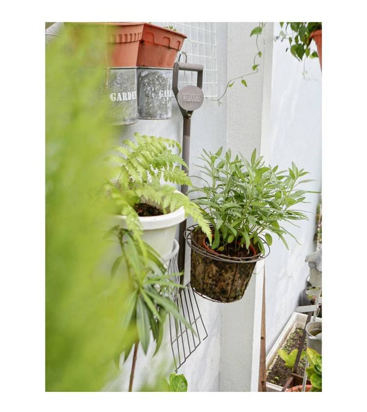 #herbs #herbsgarden #mygarden