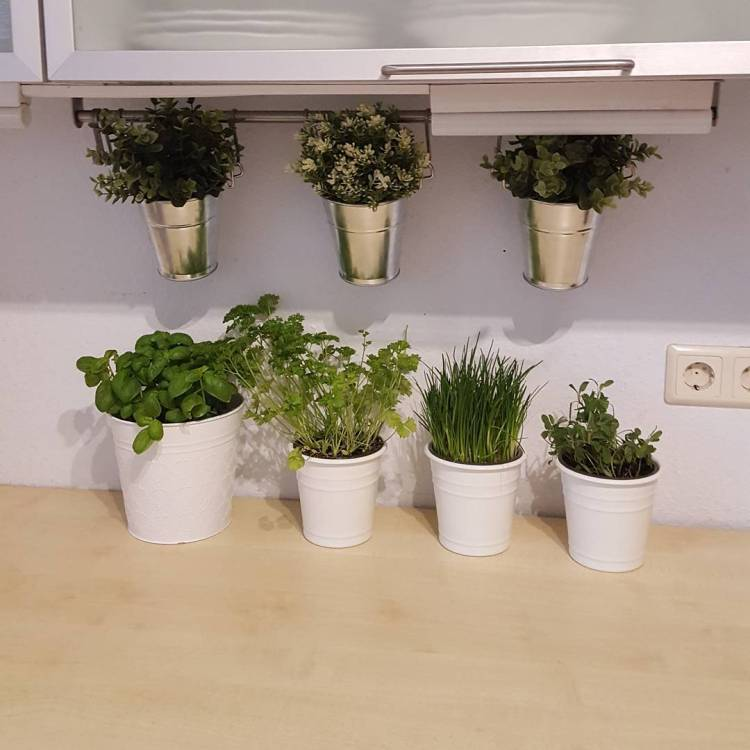 #herbs #insidegarden #healthyeating #germany #eatclean #lowcarb #lowcarbgermany