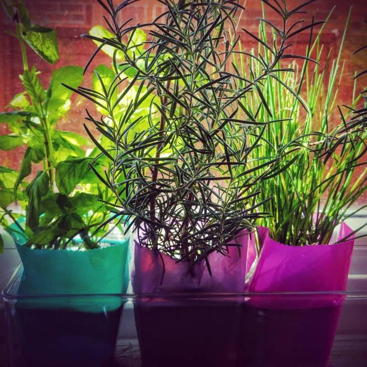 #herbsgarden #citygarden #potgarden