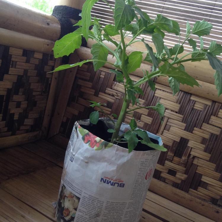 #herbsgarden #kitchengarden