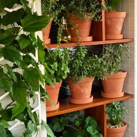 #herbsgarden #terrace