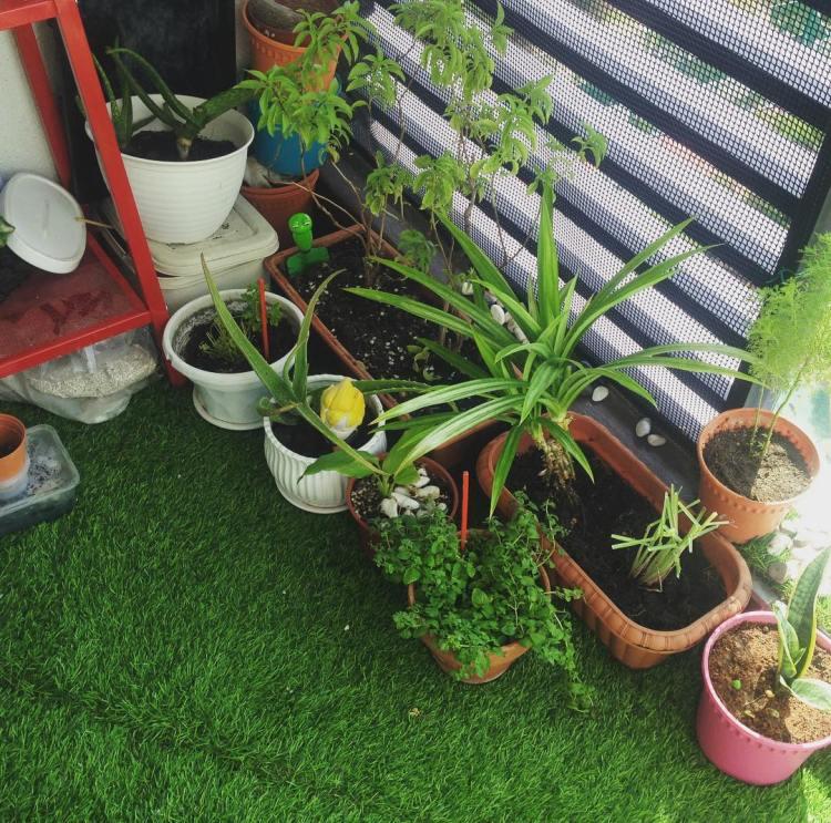 #modernplanter #herbsgarden #herbsgardening #potsnweed