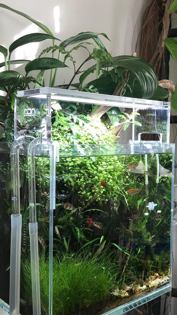 Home Aquarium Furniture Ideas