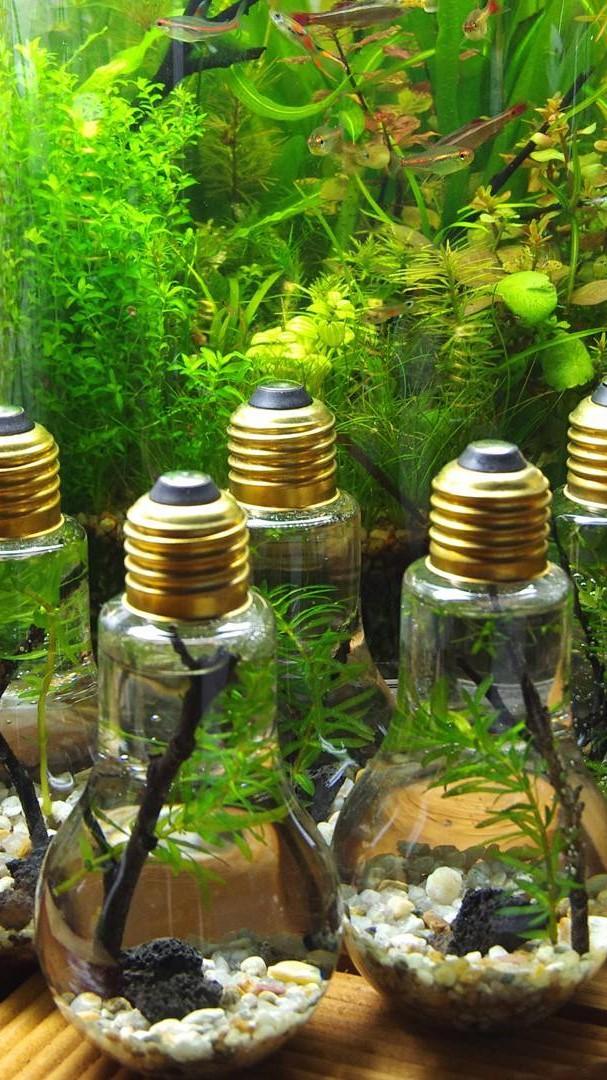 Mini Bottle Aquarium