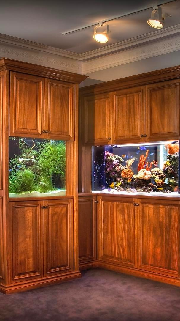 Remembering the time we installed a viewable refugium along with a thriving reef aquarium