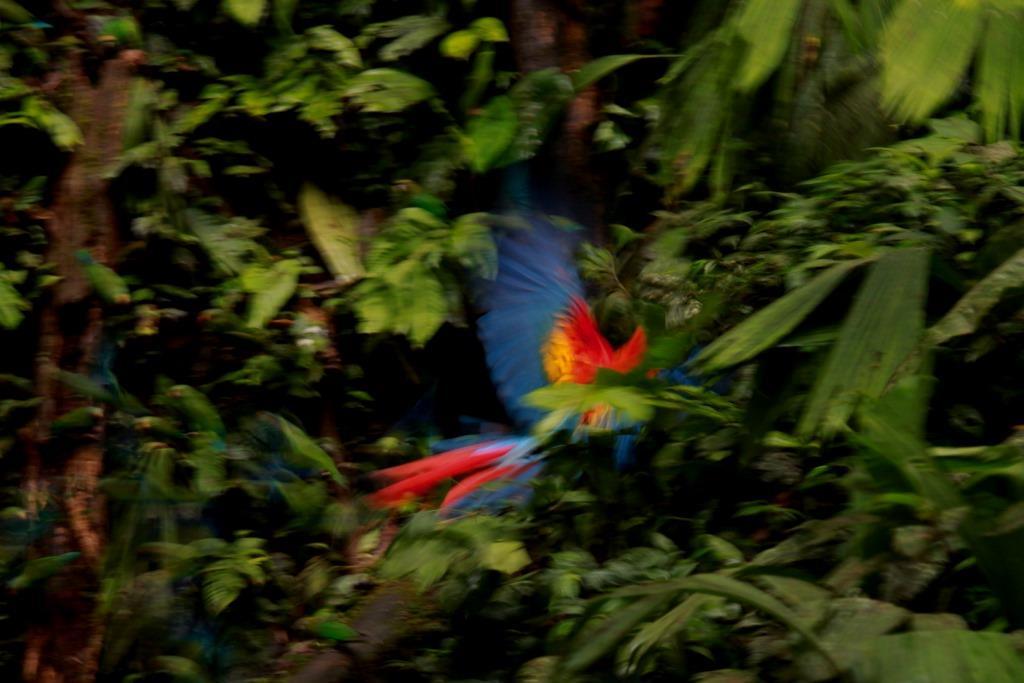 Chachalacas and Macaws - EcuadorQuest