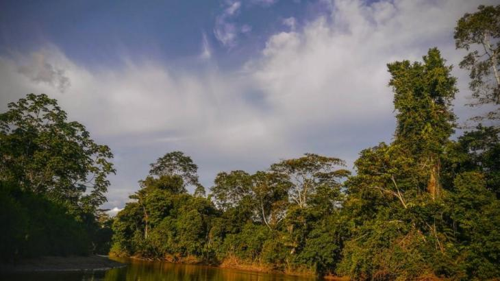 Rainforest Jewel: Shiripuno River
