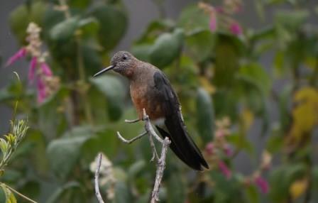 Ecuador Hummingbird Feeder Experience